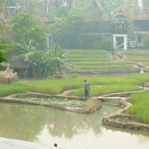 Thailand Garten